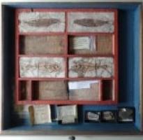 Forschungsprojekt zu Goethes Sammlungen